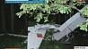 В Браславском районе выясняют причины крушения гидросамолета-амфибии У Браслаўскім раёне высвятляюць прычыны крушэння гідрасамалёта-амфібіі