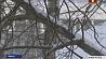 Синоптики объявили на сегодня оранжевый уровень опасности Сіноптыкі аб'явілі на сёння аранжавы ўзровень небяспекі