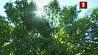 Первая неделя сентября в Беларуси ожидается теплой Першы тыдзень верасня ў Беларусі чакаецца цёплым