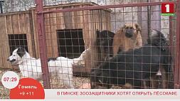 В Пинске зоозащитники хотят открыть песокафе
