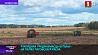 В Минской области выращивают специальные сорта картофеля У Мінскай вобласці вырошчваюць спецыяльныя сарты бульбы
