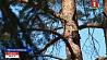 Запрет на посещение лесов введен в 8 районах Минской области  Забарона на наведванне лясоў уведзена ў 8 раёнах Мінскай вобласці