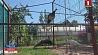 Домашние жар-птицы на частном подворье Хатнія жар-птушкі на прыватным падворку