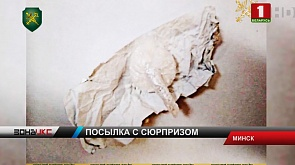 Полграмма кокаина обнаружено в почтовой посылке для жителя Минска