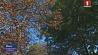Начало следующей недели будет по-настоящему осенним Пачатак наступнага тыдня будзе па-сапраўднаму восеньскім