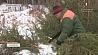 Лесники ловят новогодних браконьеров Леснікі шукаюць навагодніх браканьераў