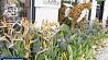 Ежегодная выставка цветов проходит в Лондоне Штогадовая выстава кветак праходзіць у Лондане