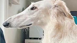 Пес с очень длинным носом стал интернет-звездой