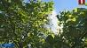 Прогноз белорусских синоптиков. 30 мая 30 градусов тепла Прагноз беларускіх сіноптыкаў. 30 мая 30 градусаў цяпла