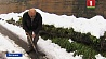 В Испании выпал снег У Іспаніі выпаў снег