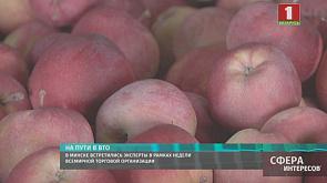 Курс на правильное питание или шоппинг с пользой для здоровья