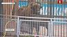 В Минском зоопарке животные переехали в теплые вольеры У Мінскім заапарку жывёлы пераехалі ў цёплыя вальеры