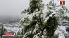 В Карпатах выпал снег У Карпатах выпаў снег