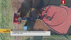 Спрос на белорусскую клюкву упал в этом году