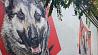 Яркие стрит-арты в поддержку бездомных животных появились в Бресте