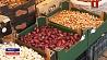 Цена на лук-севок за последние несколько недель выросла в 3 раза  Цана на цыбулю-сявок за апошнія некалькі тыдняў вырасла ў 3 разы