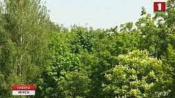 Знойная погода сохранится до конца недели Гарачае надвор'е захаваецца да канца тыдня