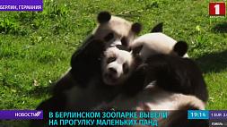 В Берлинском зоопарке вывели на прогулку маленьких панд