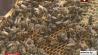 В Минской области начался  сбор первого меда У Мінскай вобласці пачаўся  збор першага мёду