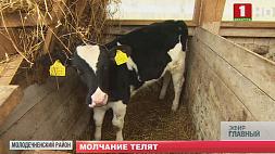 В этом году падеж скота сократился на 17 % в сравнении с началом прошлого Сёлета падзёж жывёлы скараціўся на 17 % у параўнанні з пачаткам мінулага