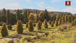 Минск станет более комфортным и зеленым  Мінск стане больш камфортным і зялёным