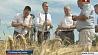 Виды на урожай-2017 Разлікі на ўраджай-2017 Belarusian farmers plan to harvest over 7 million tons of grain this year