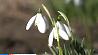 Ранняя весна и ранние цветы Ранняя вясна і раннія кветкі