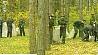 Субботники по наведению порядка в лесу Суботнікі па навядзенні парадку ў лесе