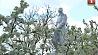 Человеческие останки, которым более полувека, обнаружены в Каменецком районе  Чалавечыя астанкі, якім больш за паўстагоддзя, выяўлены ў Камянецкім раёне