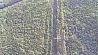 Торфяной пожар в Минском районе удалось ликвидировать оперативно Тарфяны пажар у Мінскім раёне ўдалося ліквідаваць аператыўна