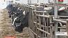 Факты бесхозяйственности на экспериментальной базе  в Пуховичском районе Факты безгаспадарчасці на эксперыментальнай базе  ў Пухавіцкім раёне