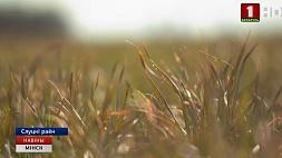 В Минской области начался массовый сев ранних яровых зерновых и зернобобовых культур У Мінскай вобласці пачалася масавая сяўба ранніх яравых зерневых і зернебабовых культур