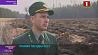 Лесхозы Минской области начнут высадку молодого леса на две-три недели раньше