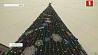 Новогодними огнями сегодня засияет главная елка страны Навагоднімі агнямі сёння заззяе галоўная ёлка краіны