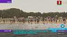 Рекордный заплыв моржей на Цнянском водохранилище в День защитников Отечества