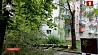 В Минске два человека пострадали из-за непогоды У Мінску два чалавекі пацярпелі з-за непагадзі