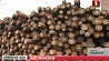 Миллионы кубометров леса лежат на складах  Мільёны кубаметраў лесу ляжаць на складах