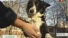 В Витебском регионе прописку уже получили около 17 тысяч животных У Віцебскім рэгіёне прапіску ўжо атрымалі каля 17 тысяч жывёл