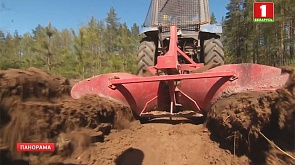 В лесах Беларуси сохраняется пожароопасная обстановка
