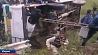 В Индии грузовик c людьми упал с моста  У Індыі грузавік з людзьмі ўпаў з моста