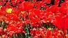 Необычные флористические решения от столичных озеленителей Незвычайныя фларыстычныя рашэнні ад сталічных азеляніцеляў