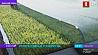 12 миллионов сеянцев сосны в год сможет выращивать новый комплекс в Минском районе 12 мільёнаў сеянцаў хвоі за год зможа вырошчваць новы комплекс у Мінскім раёне