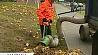 В борьбе за чистоту пылесос для листвы У барацьбе за чысціню пыласос для лісця