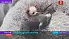 В Нью-Йоркском приюте для животных  подружились щенок и голубь  У Нью-Йоркскім прытулку для жывёлін  пасябравалі шчанюк і голуб