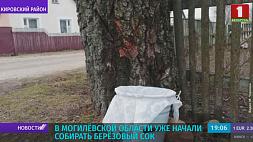 В Кировском районе  уже начали собирать березовый сок У Магілёўскай вобласці ўжо пачалі збіраць бярозавы сок