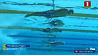 Илья Шиманович вышел в финал чемпионата мира по водным видам спорта на дистанции 50 метров брассом Ілья Шымановіч выйшаў у фінал чэмпіянату свету па водных відах спорту на дыстанцыі 50 метраў брасам Ilya Shimanovich reaches final of world championship in aquatic sports at 50 meters breaststroke