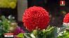 Насладиться ароматными красками осени приглашает Ботанический сад Натхніцца духмянымі фарбамі восені запрашае Батанічны сад