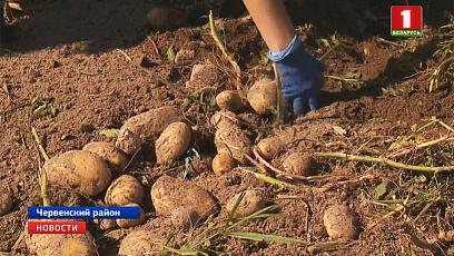 Аграрии Минской области приступили к уборке картофеля