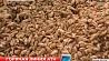 Сотрудники госконтроля  в Ошмянском районе  выявили факты  закапывания пшеницы в землю Супрацоўнікі дзяржкантролю  ў Ашмянскім раёне  выявілі факты  закапвання  пшаніцы ў зямлю