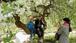 """Ботанический сад приглашает минчан поучаствовать в """"Зеленом квесте"""" 30 и 31 мая"""